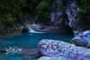 Sierra Gorda - Macaw - 217