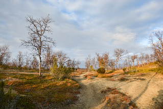 DSC_3737 | by adventurelandlapland
