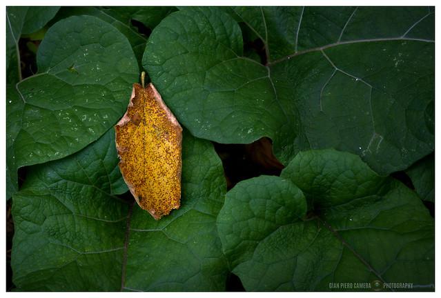Autumn blow