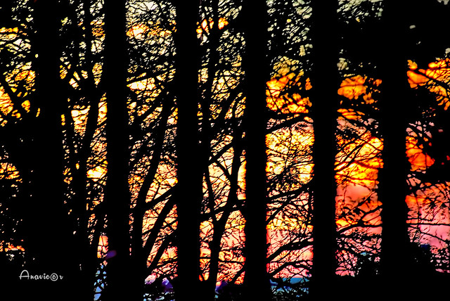 05_Sunset through the trees