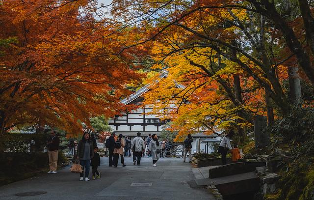 Kyoto Autumn Stroll