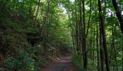 Jak jsem si udělala z běhání drogu alias abstinenční příznaky pravidelného běžce