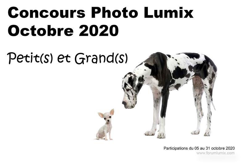 """Concours photo octobre 2020 """"PETIT(S) ET GRAND(S)"""" 50419696851_20f472154c_c"""