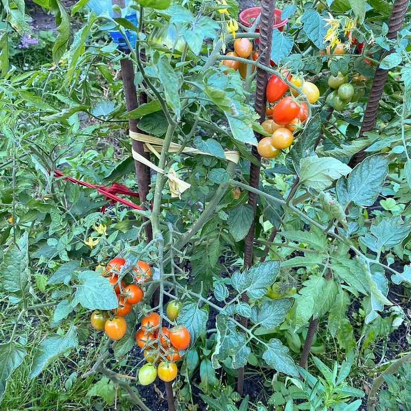 Огород в сентябре