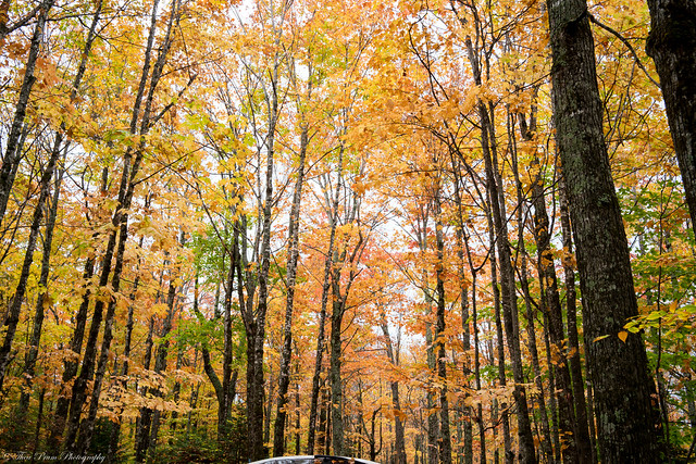 Fall foliage in Baxter State Park from the Abol campground.