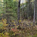 A hike in the bush in autumn - Oct 2020