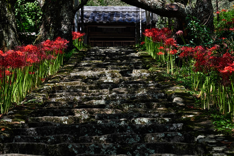 Manjusaka scenery