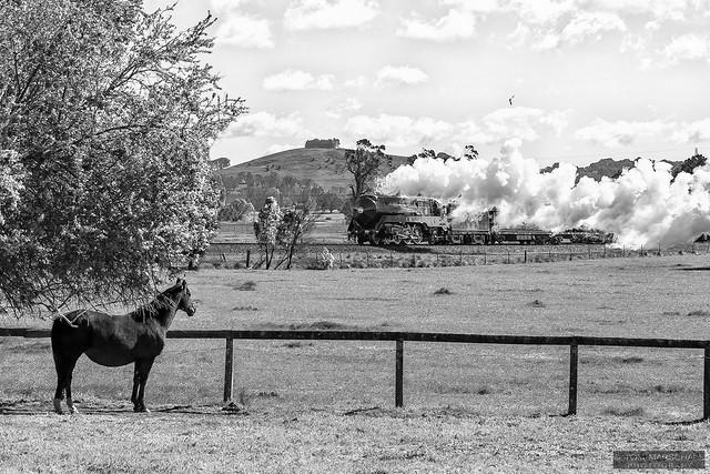 Smoky horsepower