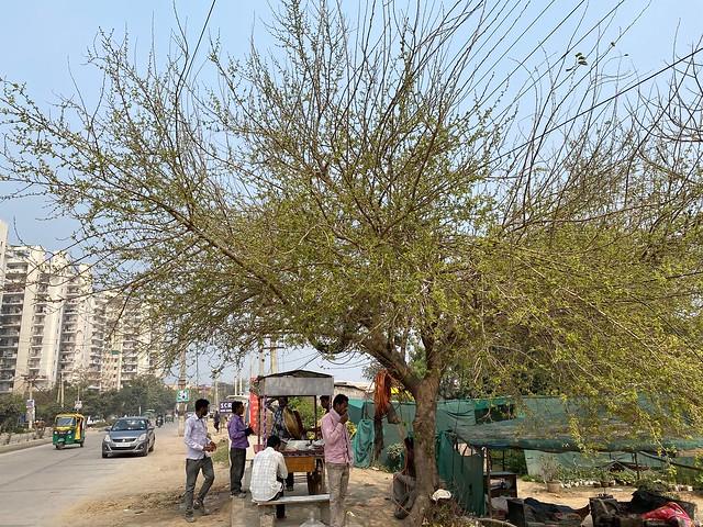City Food - Triloki Kashyap's Aloo Parathas, Palam Vihar