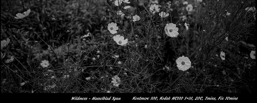 Wildmess - Film Hasselblad | by Photo Alan