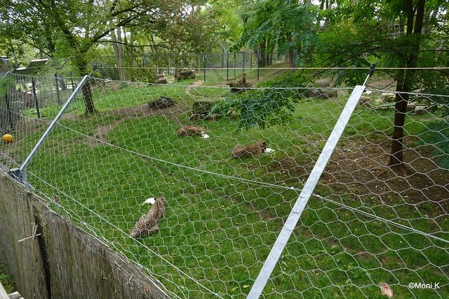 16-Kaninchentag bei den Gepardinnen