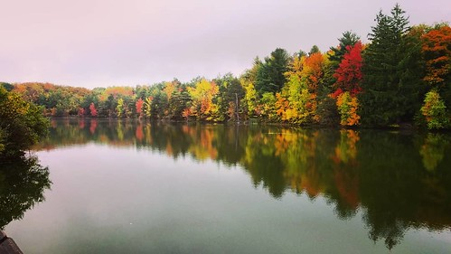 Reflective, the other way #ChestnutRidge #wny #orchardpark #autumn #fall #nature #hiking #trees