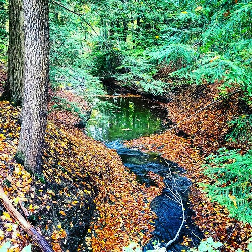 Stream #ChestnutRidge #wny #orchardpark #autumn #fall #nature #hiking #trees #stream #runningwater