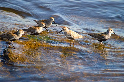 Common snipes (Teacher and students)