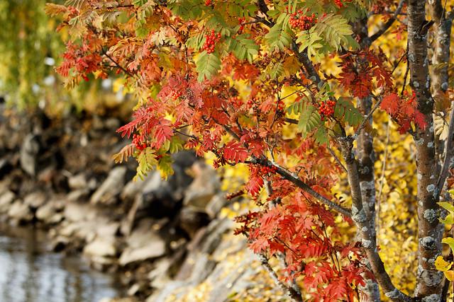 Höstbilder  /autumn pictures  /