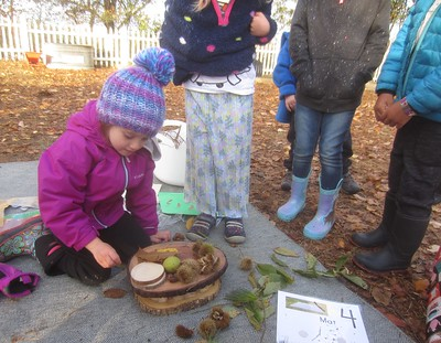exploring tree seeds, leaves, needles, nuts, pods, and rings