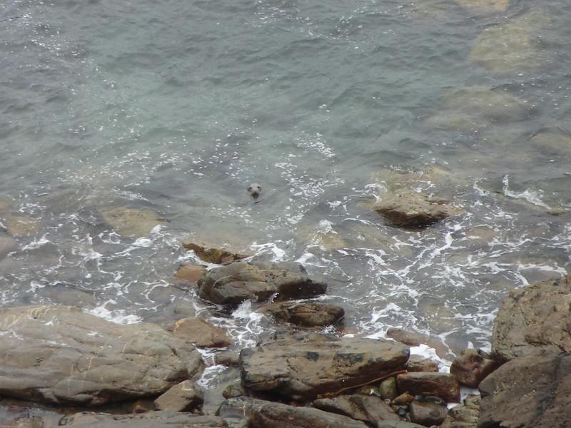 Seal, Mouse's Haven / Deadman's Bay