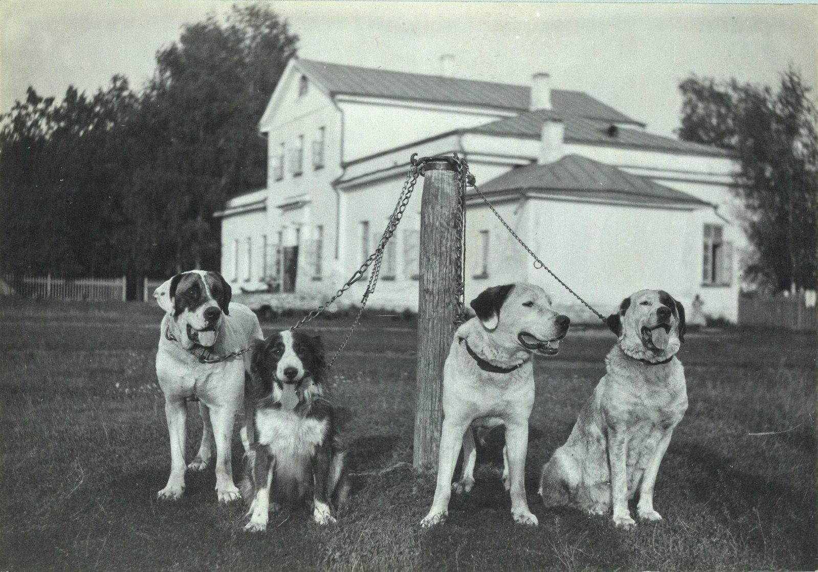14. Собаки на фоне флигеля