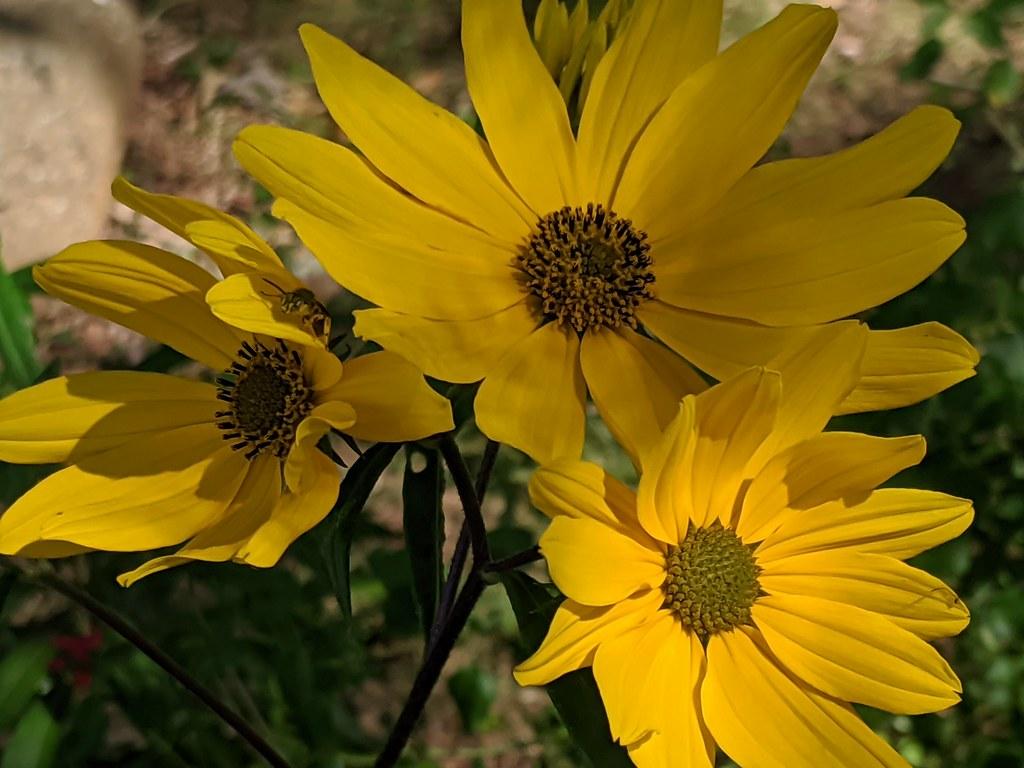 Garden Photos 10/5/20