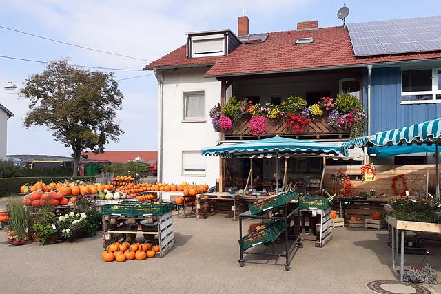 Oktober 2020 ... Kürbisse in Neubotzheim bei Ladenburg ... Brigitte Stolle