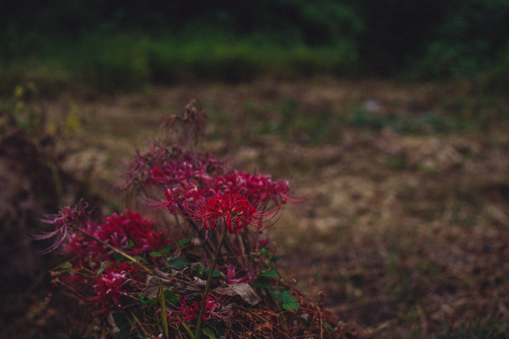 Nikon D4 + Tamron F013