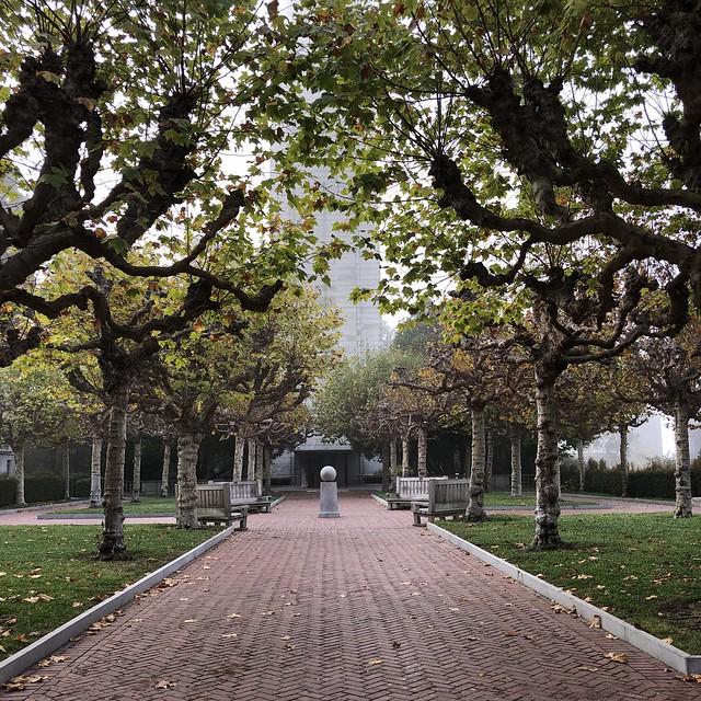 Fog at the Campanile, Morning