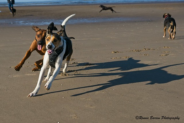 fast action on the beach!