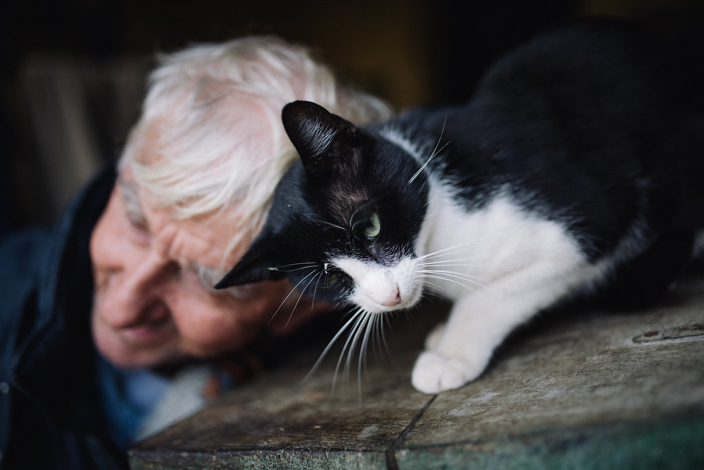 Close up of a cat playing with an old man.