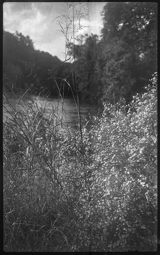 tallgrasses wildflowers landscape asheville northcarolina kochmannkorelle folder 127 127film film 127filmcamera kodaktmax400 hc110developer monochrome monochromatic blackandwhite mediumformat