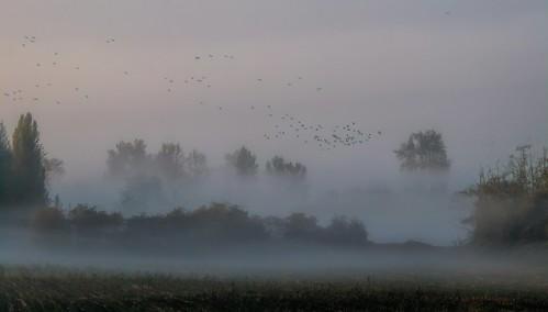 landscape outdoor cloud fog ducks field trees