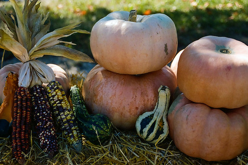 Gourds | by Jim Grey