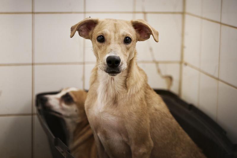 Gerência de Zoonose tem 15 cães aptos para adoção