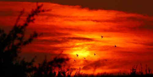 roswell newmexico sunset birds fiery clouds landscape