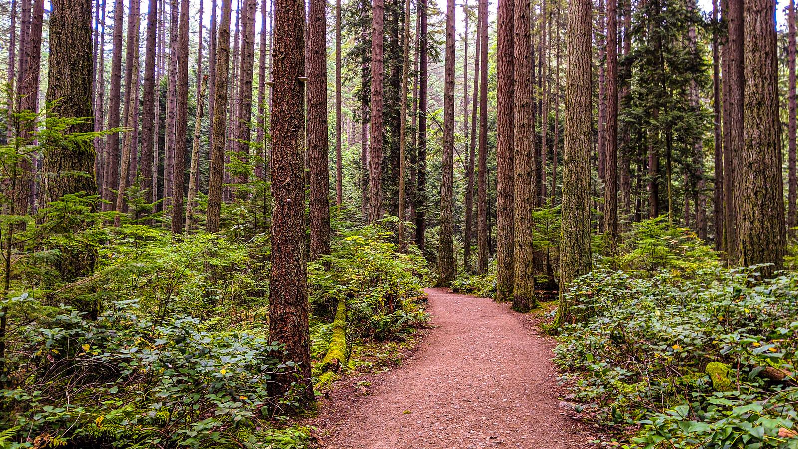 Pacific Spirit Regional Park at 2900km