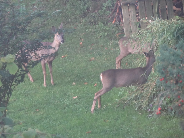 A Visit from the Deer