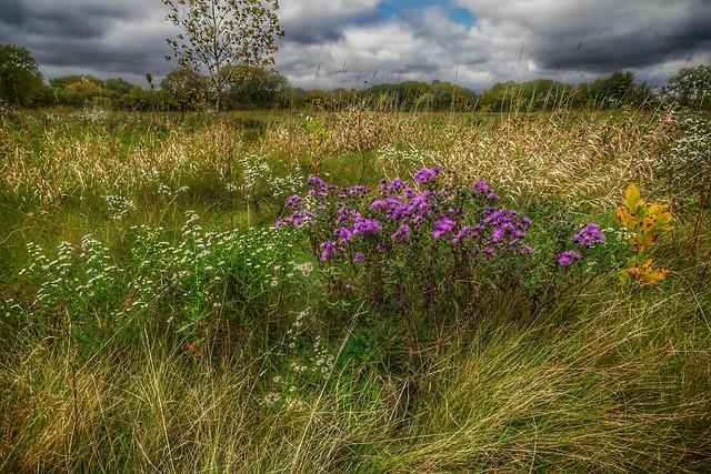 Autumn Prairie
