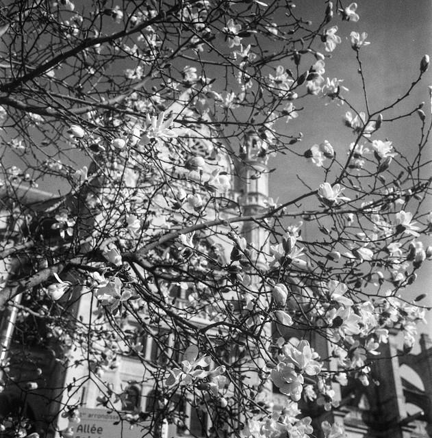 #tlrtuesday no. 136: Saint-Eustache. Through the buds