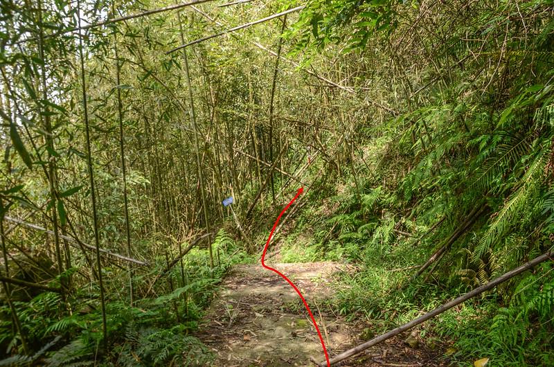 紅毛山水泥產道終點山徑入口