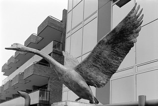 Two swans, Catherine Marr-Johnson, sculpture, Battersea Bridge, Wandsworth, 1988 88-5g-62-positive_2400