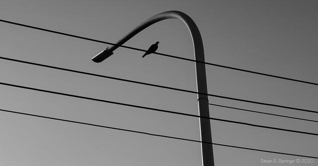 bird in monochrome
