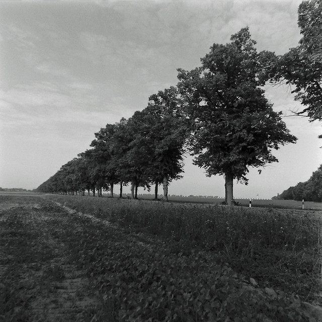 Baumallee in Brandenburg 23.9.2020
