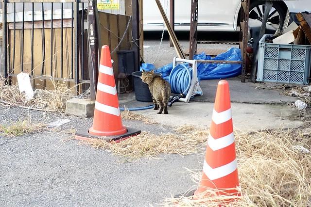 Today's Cat@2020ー10ー06