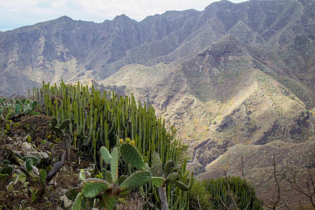 Barranco de Igueste de San Andrés en Tenerife