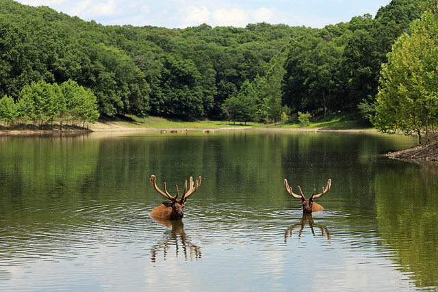Lone Elk County Park