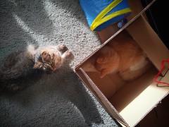 #cats #CatsOfInstagram #catsitting #CatsInBoxes