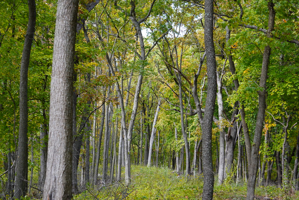 Iowa forest in late summer