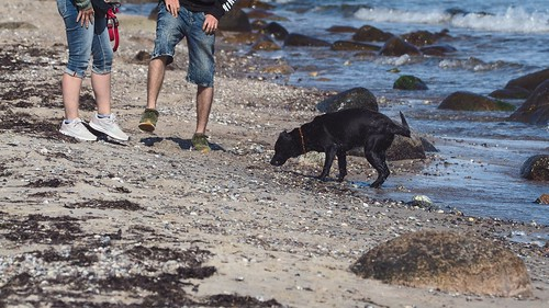 "Look here dog: ""So you have to shake yourself!"" 