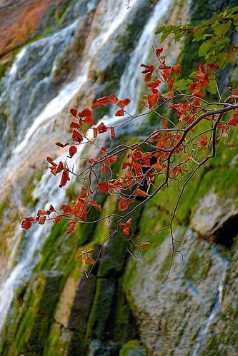 eechillington nikond7500 viewnxi corelpaintshoppro bellscanyon hiking utah water rocks foliage