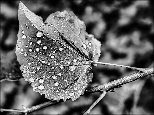 P8299793_B_fl - der gute regen