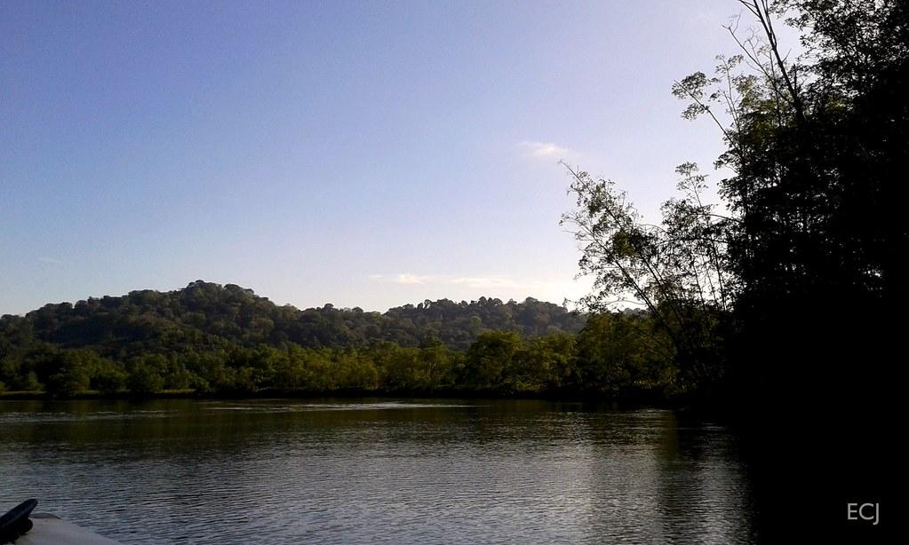 Bambúes sobre la corriente, humedal nacional Térraba-Sierpe / Bamboos on the stream, Térraba-Sierpe